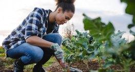 Gardening Tips That Save You Green